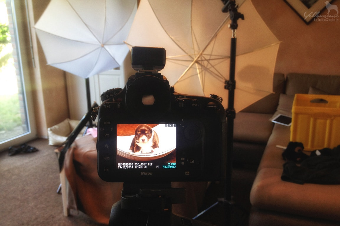 Lulu brego welpen heute abend welpen tv yellowstone for Spiegel tv themen heute abend