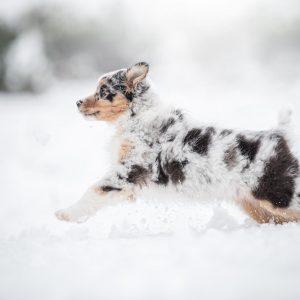 Nuri im Schnee Bild 2 300x300 - Nuri im Schnee