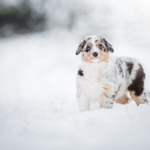 Nuri im Schnee Bild 3 300x300 - Nuri im Schnee