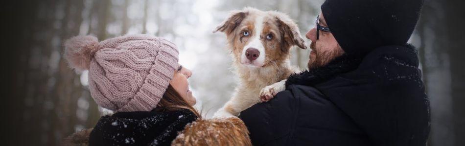 Seven-Henry-2-Hazel-Australian-Shepherd-puppy-4-months-Beitragsbild.jpg