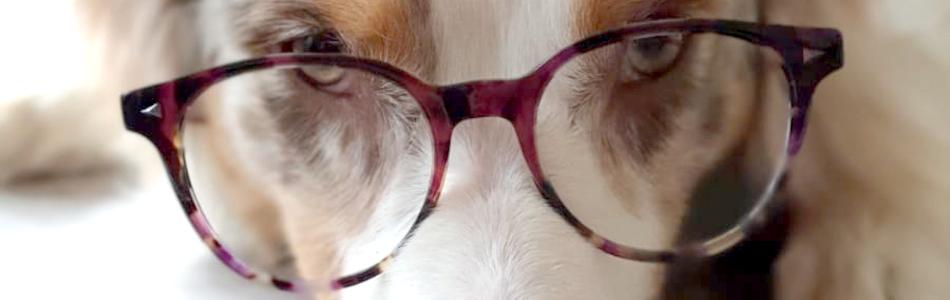 Hund mit Lesebrille