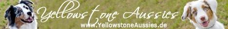 Yellowstonesaussies banner - Links