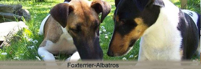 foxterrier - Links