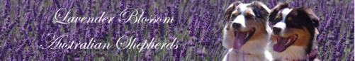 lavenderblossom - Links